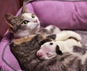 A gata Lurlene adotou o pitbull Noland. (Foto: Reprodução / Daily Mail)