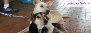 Gaucho e Luci agora na foto vencedora da capa do Portal do Dog. Foto: Divulgação