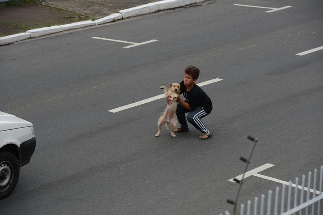 Menino resgatando cachorro atropelado. (Foto: Reprodução / ANDA)