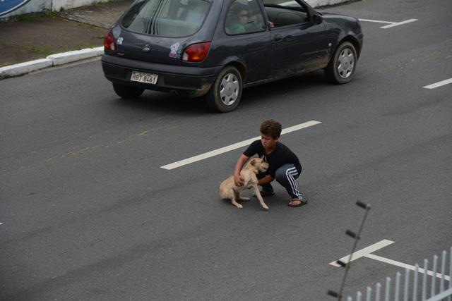 O motorista fugiu sem prestar socorro. (Foto: Reprodução / ANDA)