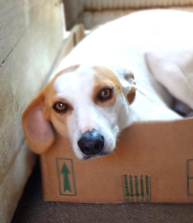 Bia foi encontrada em péssimas condições em uma casa de aluguel. Agora vive sob os cuidados da protetora Janaína Malagoli e aguarda adoção. (Foto: Reprodução / Natal Animal)