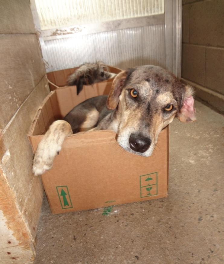 Tufão foi abandonado numa casa, agora vive com a protetora Janaína Malagoli, enquanto aguarda adoção.  (Foto: Reprodução / Natal Animal)