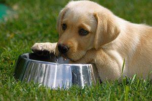 Qual a quantidade de água que o filhote deve ingerir por dia? Foto: Reprodução