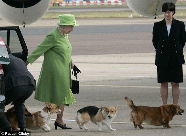 Rainha Elizabeth II e seus Corgis. Foto: Reprodução / DailyMail