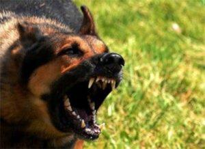 raiva canina