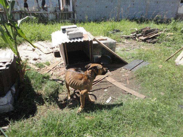 Cachorro Subnutrido (Foto: Reprodução / Facebook OFA-PG)