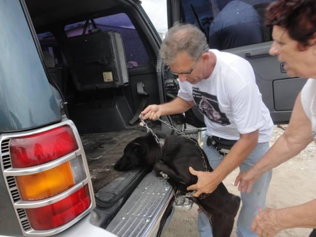 Os animais não recebiam os cuidados básicos para sobrevivência. (Foto: Reprodução / Facebook OFA-PG)