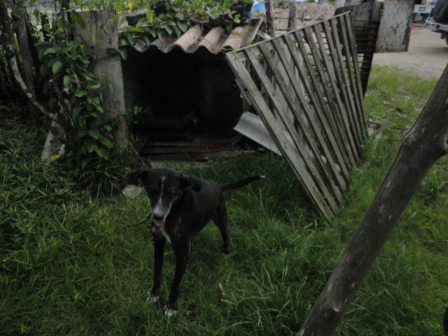 Cachorro resgatado no bairro Ribeirópolis. (Foto: Reprodução / Facebook OFA-PG)