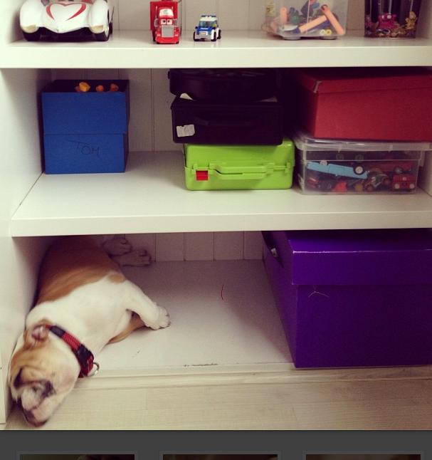 A cachorrinha dorme em qualquer canto. (Foto: Reprodução / Instagram)