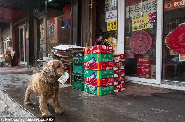 O cachorro vai até a mercearia. (Foto: Reprodução / Daily Mail)