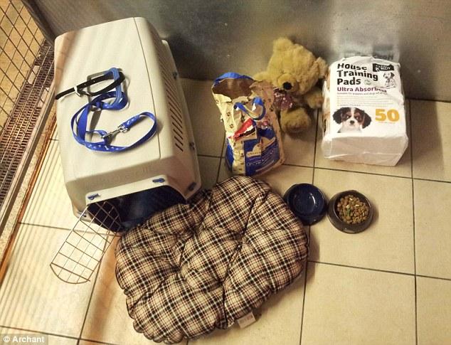 O cachorro pode ter sido um presente de natal rejeitado, porque foi encontrado com diversos produtos novos. (Foto: Reprodução / Daily Mail UK)