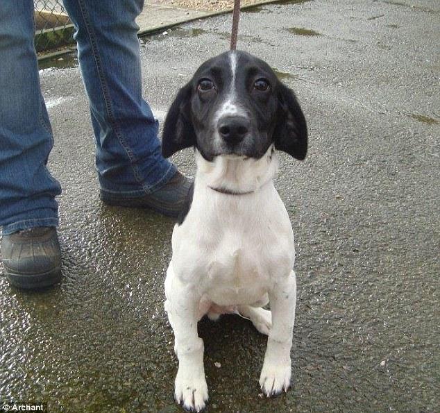 Snoopi foi abandonado com um bilhete. (Foto: Reprodução / Daily Mail UK)