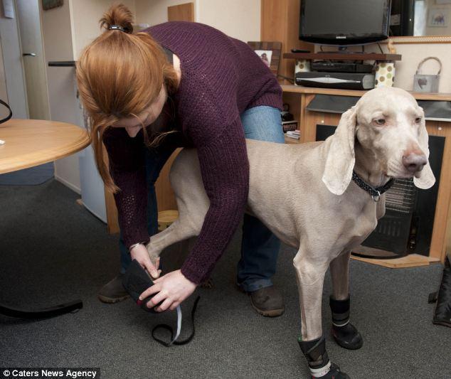 Julie Farr colocando as botas no cão. (Foto: Reprodução / Daily Mail)