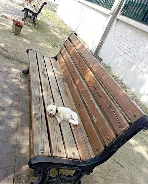 cachorro-banco-meu