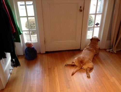 cachorro-bebe-esperando-mamae