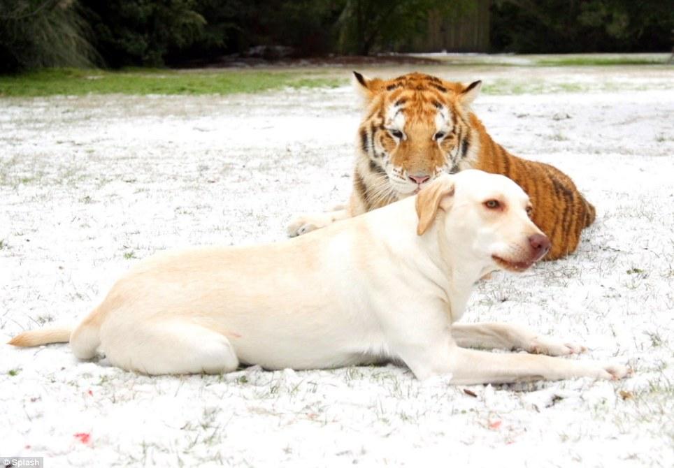 Uma amizade que fascina os visitantes. (Foto: Reprodução / Daily Mail UK)