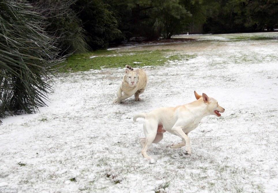 Nem o frio atrapalhou a brincadeira. (Foto: Reprodução / Daily Mail UK)