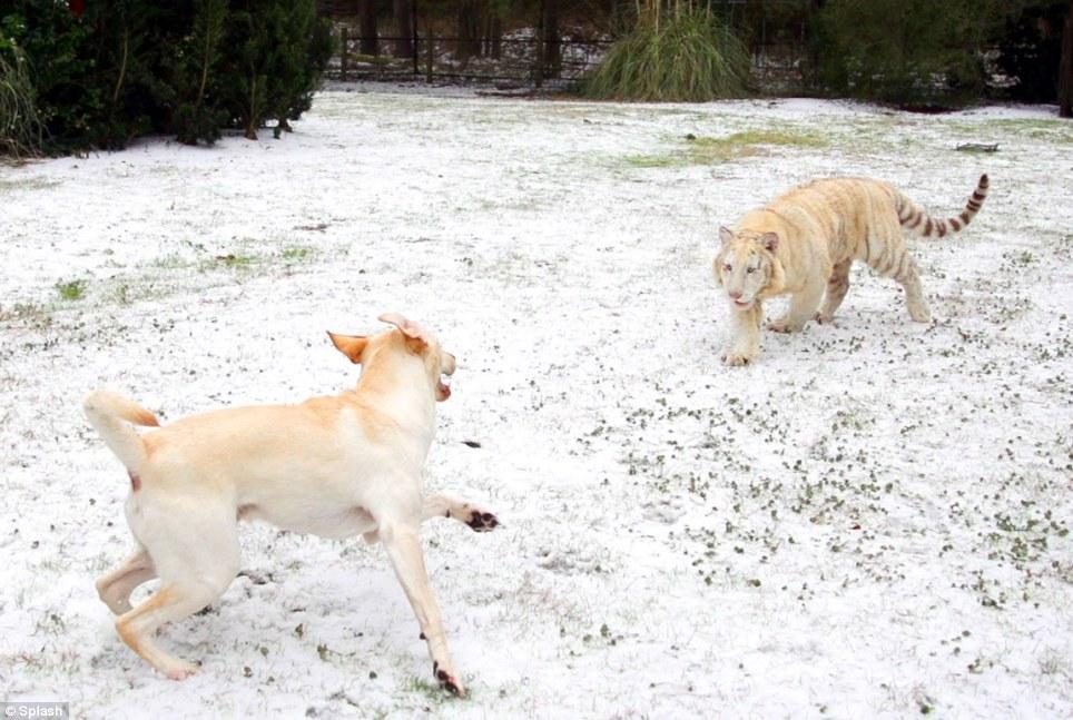 Foi a primeira vez que eles se divertiram na neve. (Foto: Reprodução / Daily Mail UK)