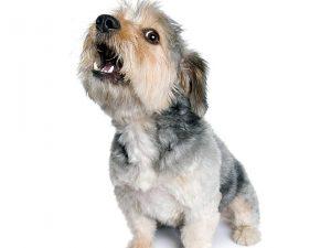 Os humanos conseguem entender os sons caninos. (Foto: Reprodução / Google)