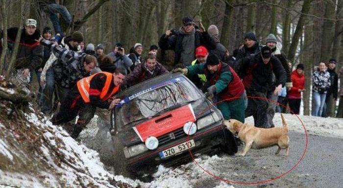 cachorro-melhor-amigo-rally