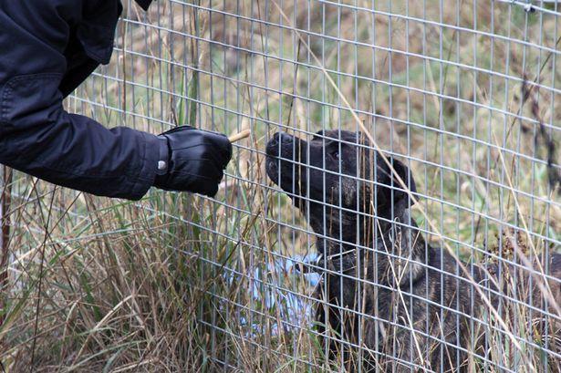 O cachorro Tyler foi resgatado de um penhasco. (Foto: Reprodução / Mirror)
