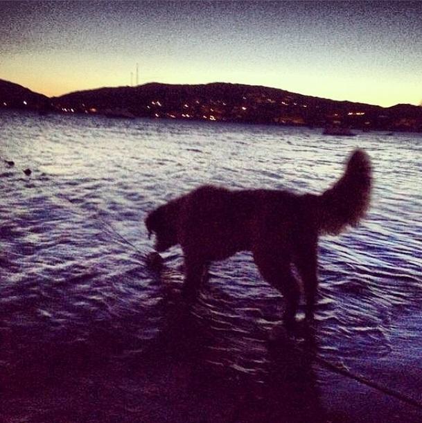 Zeca se despedindo do mar antes de ir embora. (Foto: Reprodução / Instagram)