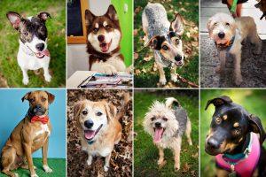 Cachorros de abrigos com nomes de celebridades. (Foto: Reprodução / New York Times)