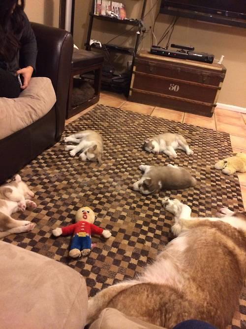 cachorros-final-festa