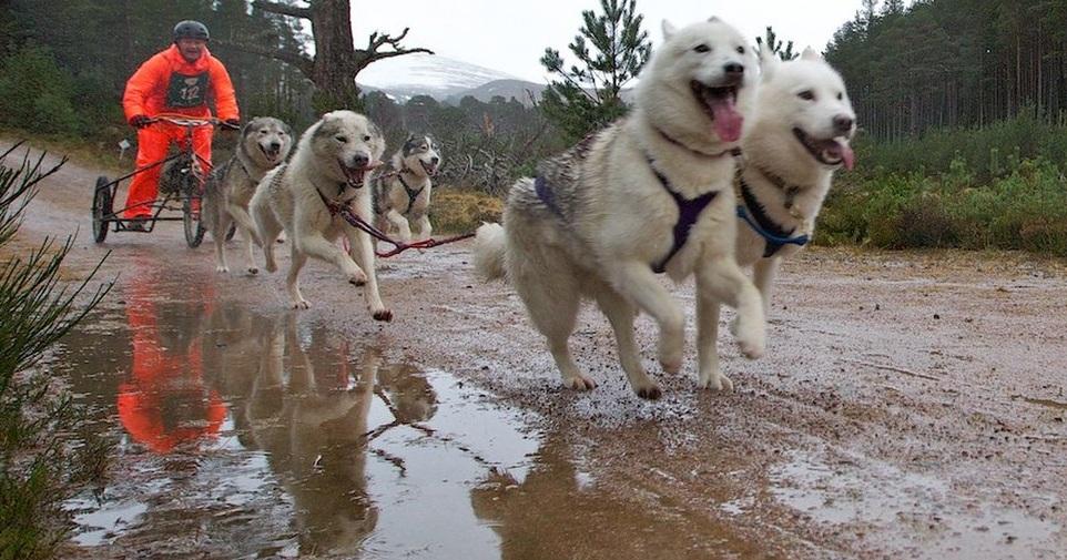 Os cães enfrentaram chuva e muita lama. (Foto: Reprodução / Paul Campbell / BBC UK)