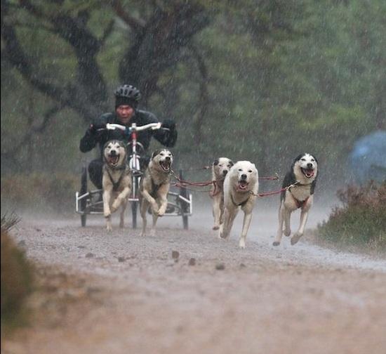 A corrida aconteceu sem neve. (Foto: Reprodução / Paul Campbell / BBC UK)