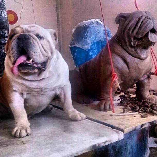 O cachorro Elvis e sua escultura. (Foto: Reprodução / Instagram)