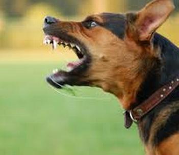 A verdade por trás das mordidas caninas. Foto: Reprodução