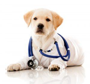 Inaugurado o segundo hospital veterinário público em São Paulo. Foto: Reprodução