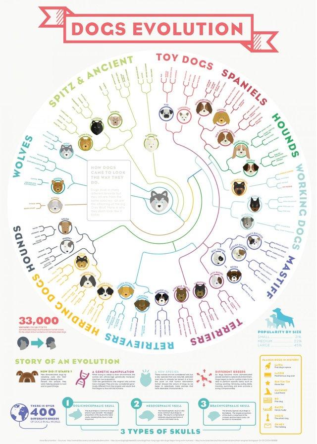 infografico-evolucao-cachorros-01
