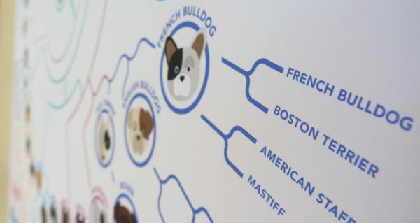 infografico-evolucao-cachorros-08