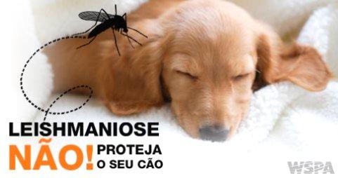 Resultado de imagem para tratamento leishmaniose canina