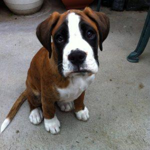 Os cães sabem que esse olhar interfere na reação humana. (Foto: Reprodução / Google)
