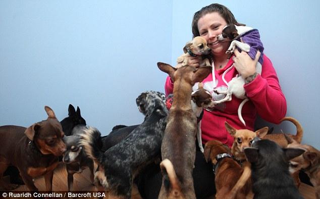 Laura Zambito resgatou 32 chihuahuas. (Foto: Reprodução / Daily Mail uk)