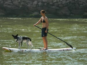 Os cachorros se divertem com o Stand Up Dogs. (Foto: Reprodução / Facebook / Marco Antônio Totó)
