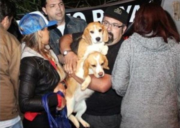 Vanessa Mesquita no resgate de beagles. (Foto: Reprodução / Facebook)