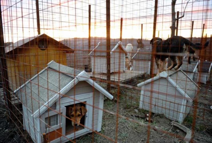 O abrigo espera receber a visita de atletas e torcedores dos Jogos Olímpicos. (Foto: Reprodução / New York Times)