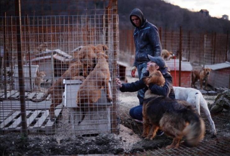 Mais de 80 cães já estão no abrigo. (Foto: Reprodução / New York Times)