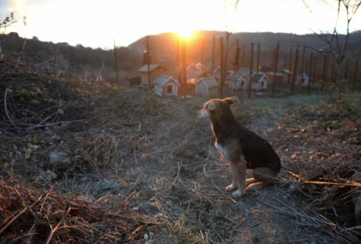 Cachorro resgatado da rua. (Foto: Reprodução / New York Times)