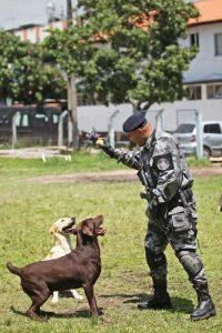Treinamento de cães no BAC. Foto: Divulgação