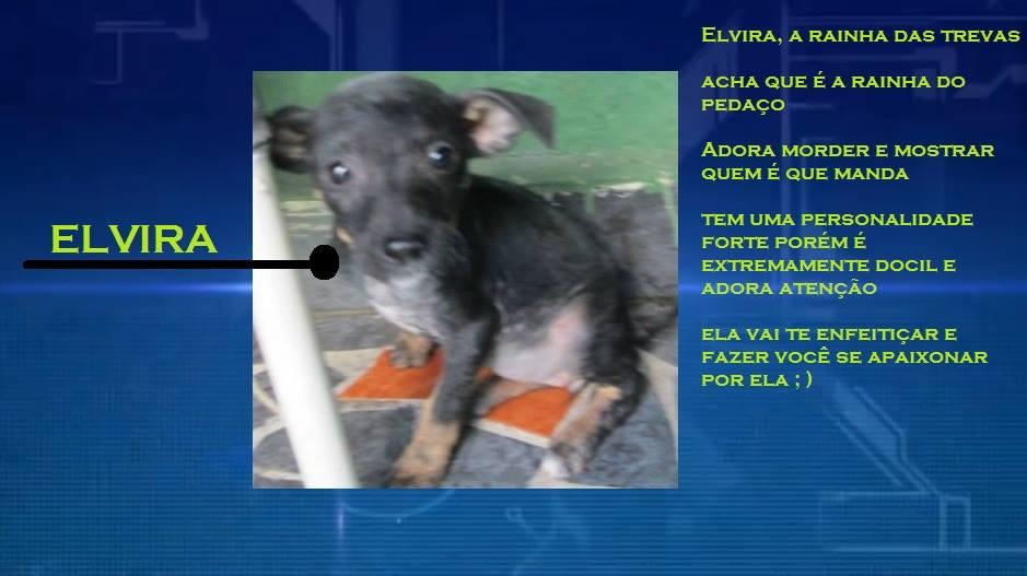 A cachorra Elvira. (Foto: Reprodução / Facebook)