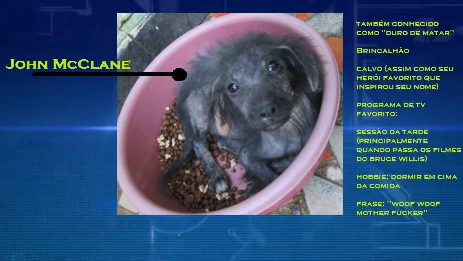 O cachorrinho John McClane. (Foto: Reprodução / Facebook)