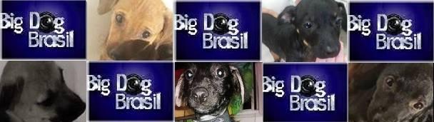 Os participantes do Big Dog Brasil. (Foto: Reprodução / Facebook)