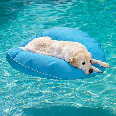 Boia para cachorro. (Foto: DIvulgação / Frontgate)
