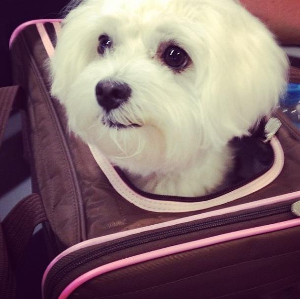 A atriz afirma que Cali se comporta e viaja quietinha. (Foto: Reprodução / Instagram)