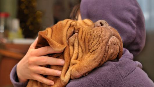 Cachorros demonstram amor de maneiras diferentes. (Foto: Reprodução / Google)